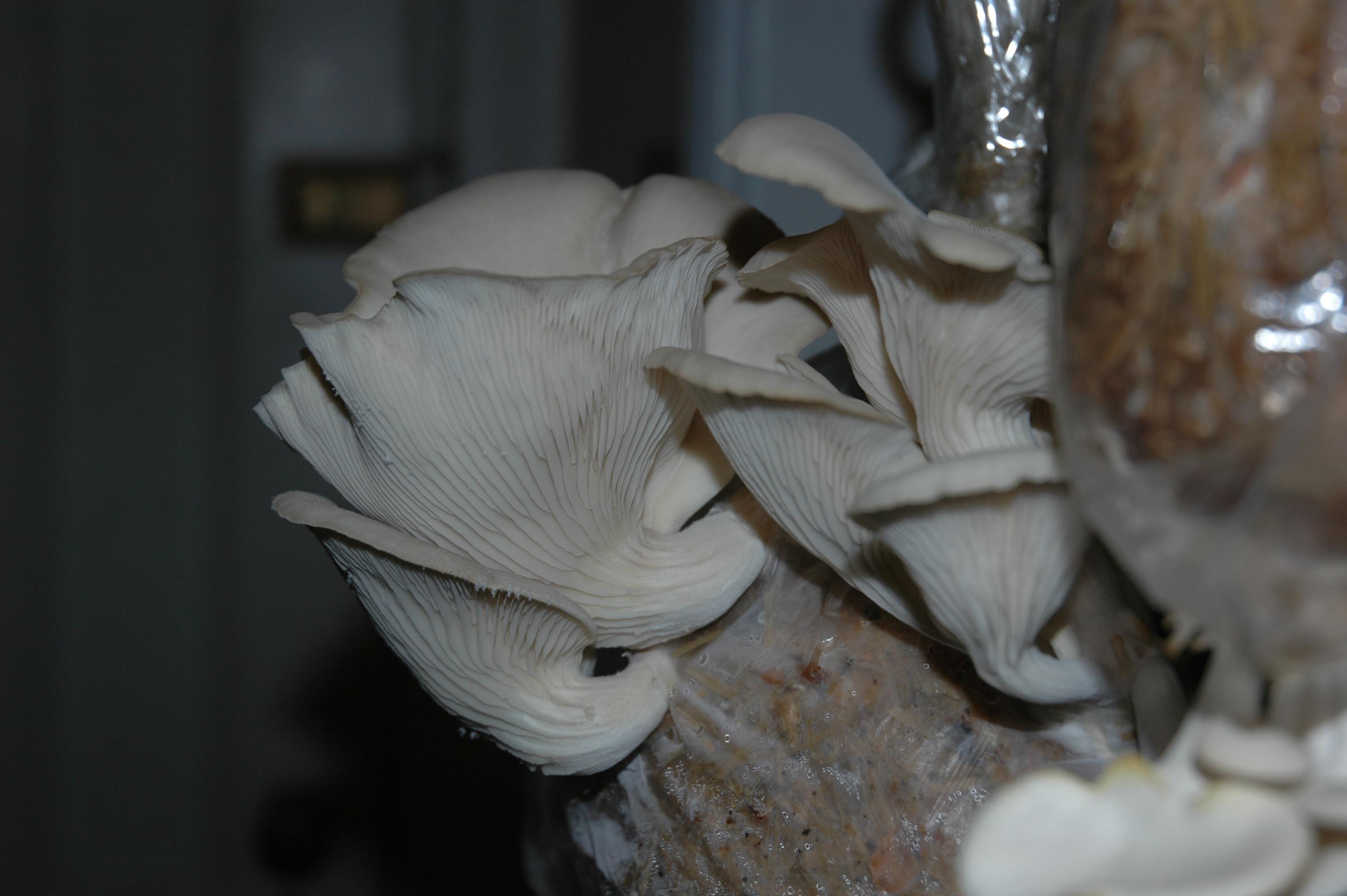 2009-10-10 223