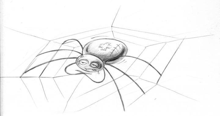 Spinne1