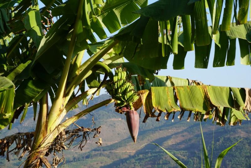 Über Banannen, Hühner & Reis und sich ständig wechselnde Temperaturen