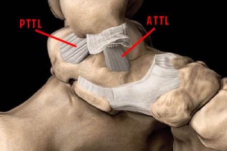 interior internal brace spring ligament » Full HD MAPS Locations ...