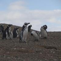 PAT: Isla de los Pinguinos