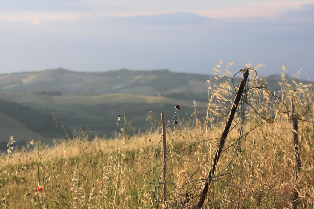 Gary Snyder e il bioregionalismo