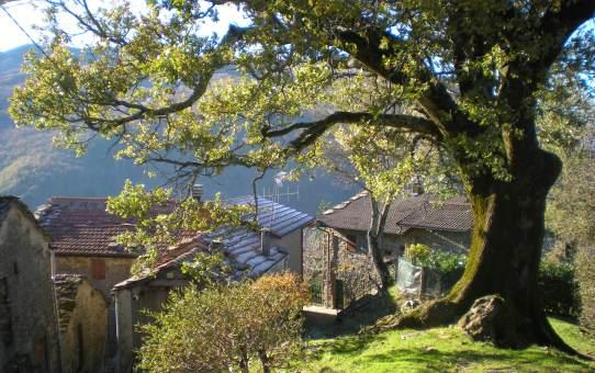 La vecchia quercia di Stagno