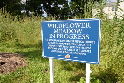 Wildflower meadow and community garden