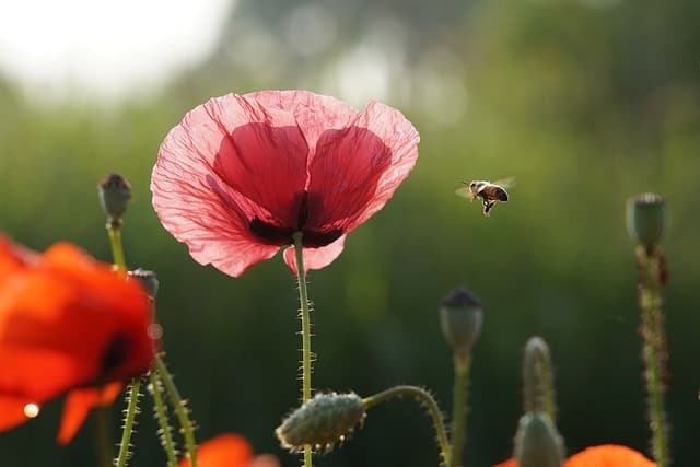 Harriton's Beekeeping & Honey Festival Returns July 20