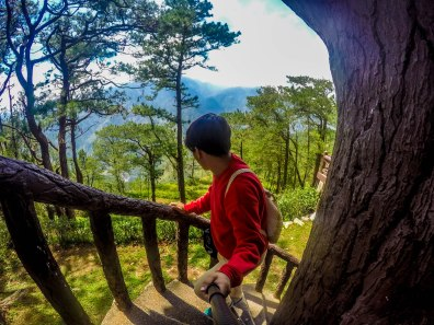 up the tree house at Philippine Military Academy, Baguio