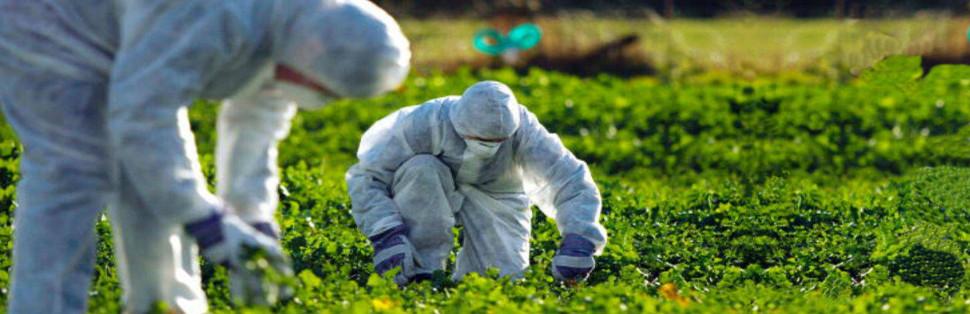 Cultivos inocuos y necesarios
