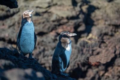archipielago-islas-galapagos-Ecuador-38
