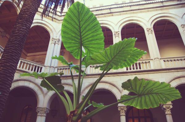 Ateneu-Universitari-Sant-Pacia