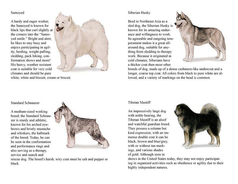 Dog Care Merit Badge – Athletics Merit Badge Worksheet