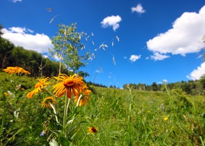 mtn meadow