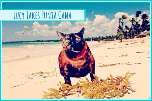 Flat Lucy Takes Punta Cana, Dominican Republic // Take your pet on vacation with you!