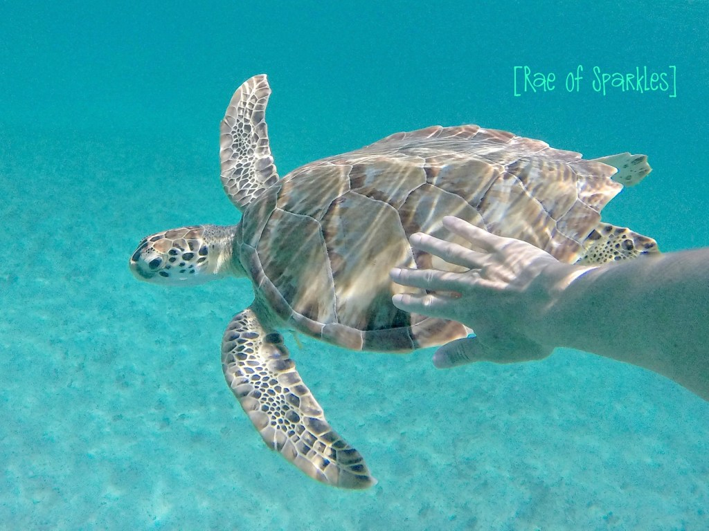 Snorkeling with Sea Turtles on Water Island USVI