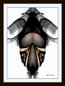 Conceptual Art by Rafael Salazar