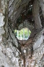 Tree View ~ Photography by Rafael Salazar