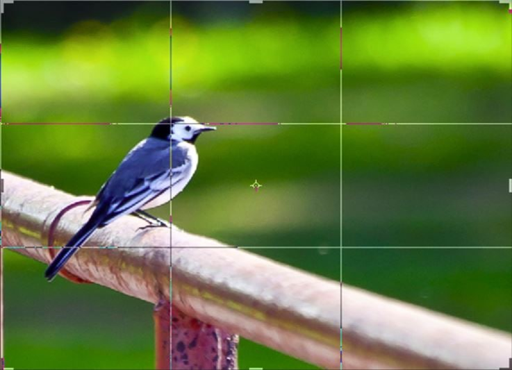 kadrowanie za pomocą zasady trójpodziału - mocne punkty zdjęcia
