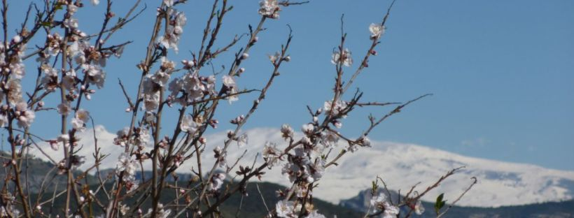 Febbraio andaluso con vista Sierra Nevada
