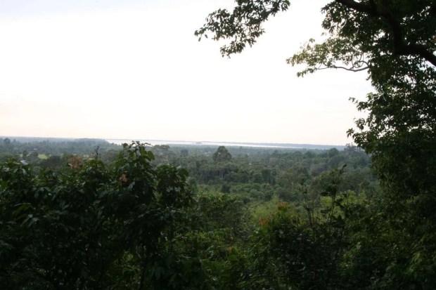 La natura in cui sono immersi i templi di Angkor