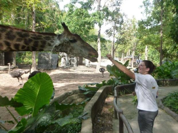 Lo zoo di Chiang Mai