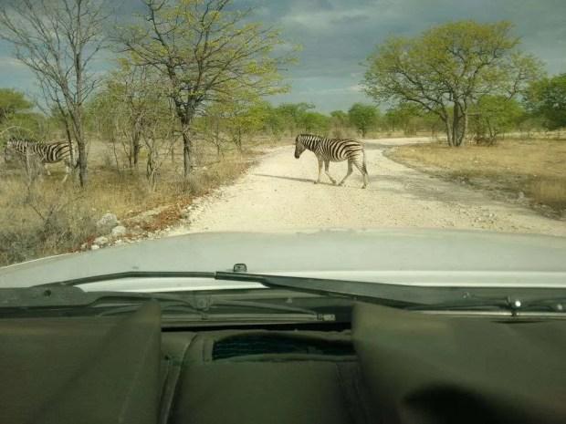 Self drive Namibia: precedenza ai pedoni