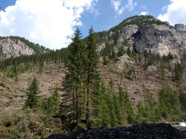 La devastazione dei boschi