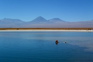 Floating in the lake in the salar of San Pedro de Atacama. In the background the Licancabour