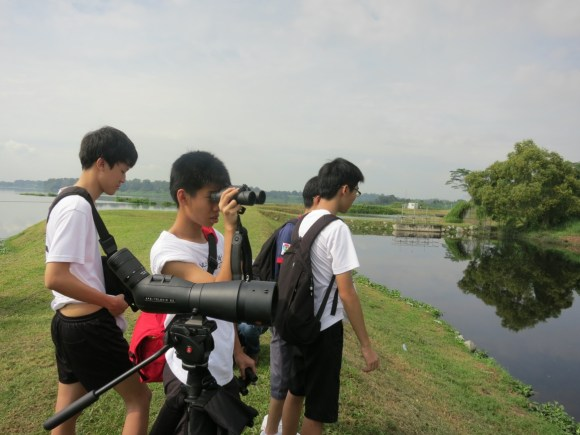 Birdwatching at Kranji Marshes