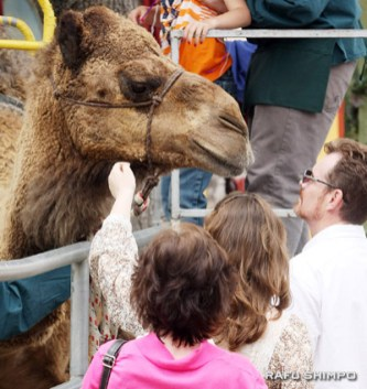 Many took advantaged of the chance to ride and meet a camel up close.