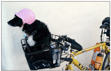 Rosie ready for a bike ride. A freak accident seemed to be an omen for bad things to come.