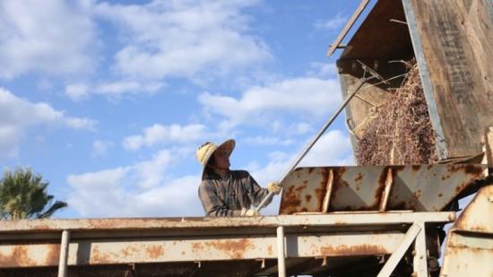 """Changing Season: On the Masumoto Family Farm"""