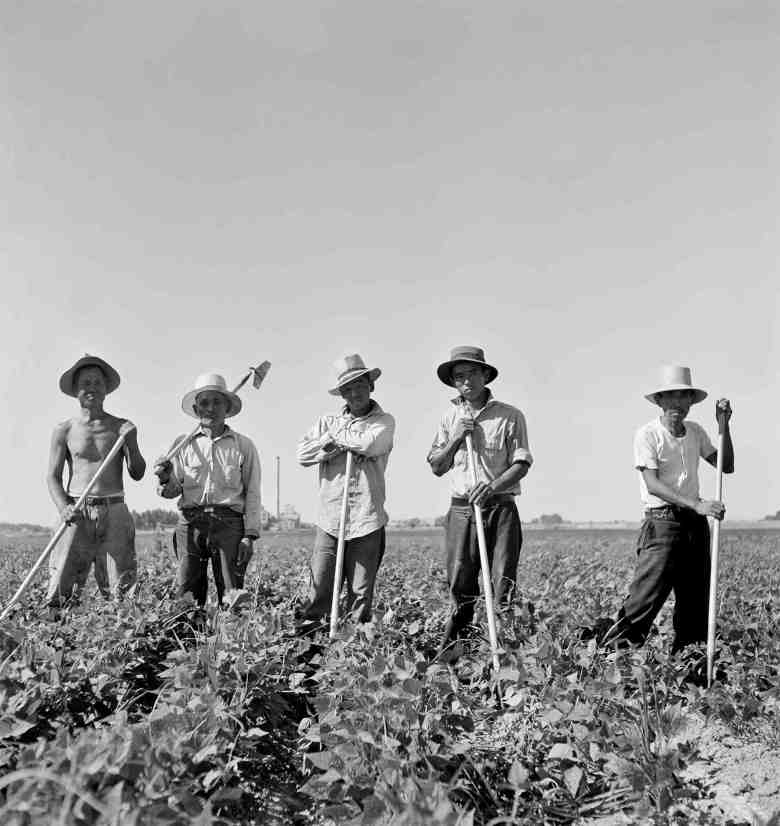Laborers in sugar beet fields outside of Shelley, Idaho. (Library of Congress, Prints & Photographs Division, FSA-OWI Collection, LC-USF34-073809-E)