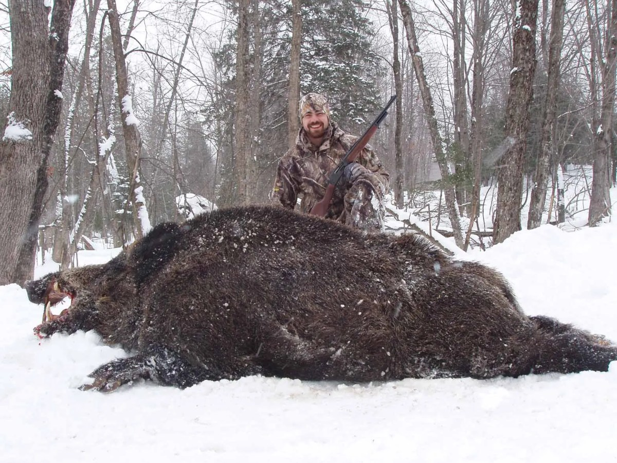 Boar Hunting – Experience Your Winter Hunt
