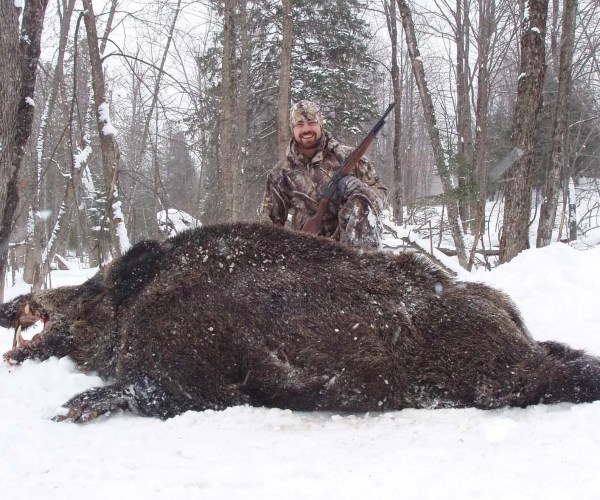 Wild Boar Hunting – Experience Real Spring Hunts