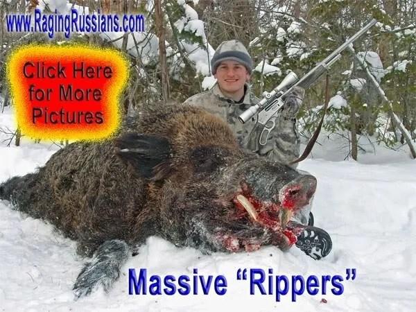 Giant Boar Hunt: Dangerous Game Hunting Adventures