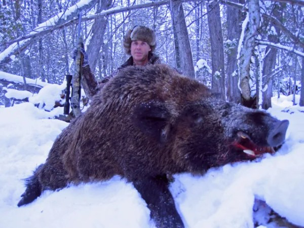 You will be Hunting Authentic Russian Boar