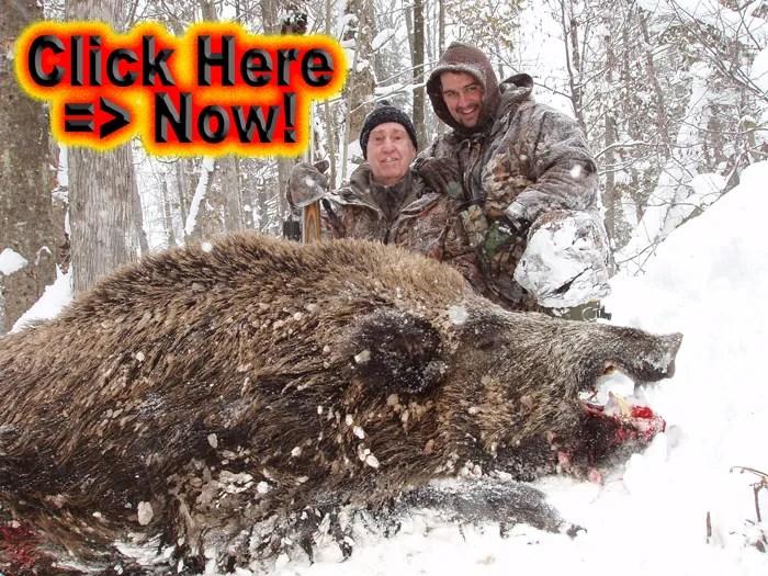 Siberian Boar Hunts – Winter Wild Boar Hunting