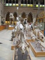 La galerie des mammifères