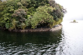 Gorfou du Fiordland