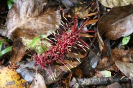 The Coromandel Fleur, graine, animal, LE truc méga bizarre qu'on a trouvé sur le bord du chemin