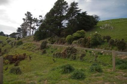 NZ_CANNIBAL-BAY_09