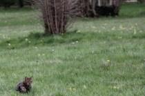 Petit pensionnaire du domaine en pleine partie de chasse