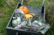 Les légumes sont prêts sur la brouette du maraîcher pour le marché