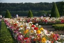 Fleurs du Parterre du Midi
