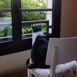 Une fenêtre, une chaise, un chat