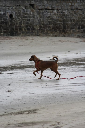Gambader sur le sable