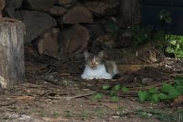 Petite chatte sauvage