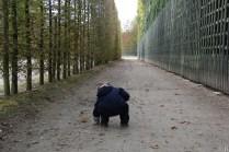 Chasse aux cailloux dans les allées de Versailles