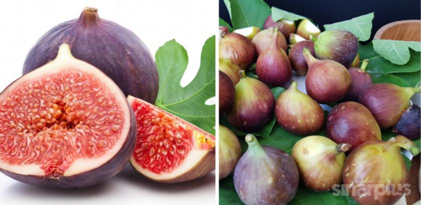khasiat buah tin dalam kesihatan