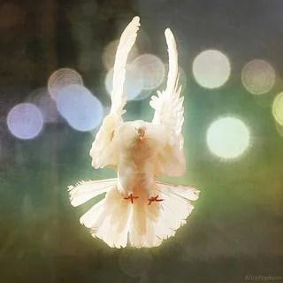 Wie du ein Friedensstifter sein kannst…