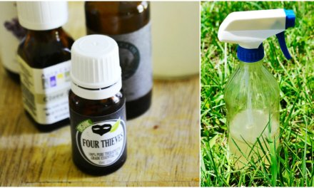 Easy Homemade Bug Spray